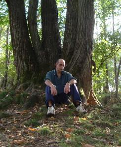binaghi sotto l'albero