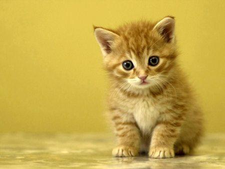 vibrisse (dietro le vibrisse, un gatto)