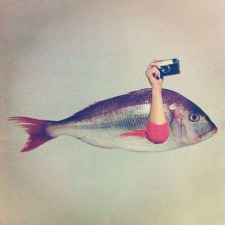 Clicca sul pesce per leggere l'articolo