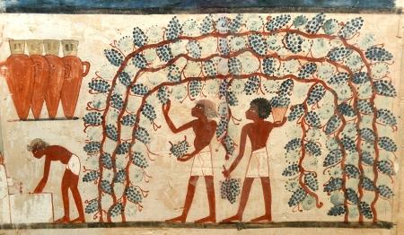 3-tomba-di-nakht-2-millennio-a-c-vendemmia
